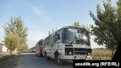 Avtobuslar karvoni Toshkentdan ishchi xizmatchiyu talabalarni paxta dalalariga tashiy boshladi.