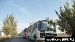 Автобуслар карвони Тошкентдан ишчи хизматчию талабаларни пахта далаларига таший бошлади.