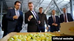 Дмитрий Медведев осматривает урожай яблок в Крыму, архивное фото 2015 года