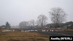 Криводаново авылында татарлар яшәгән урам. Аларның ата-бабалары бу якларга Столыпин реформасы вакытында күченгән булган