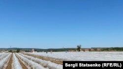 На полях ледь можна розгледіти працівників, яких так не вистачає чеським фермерам