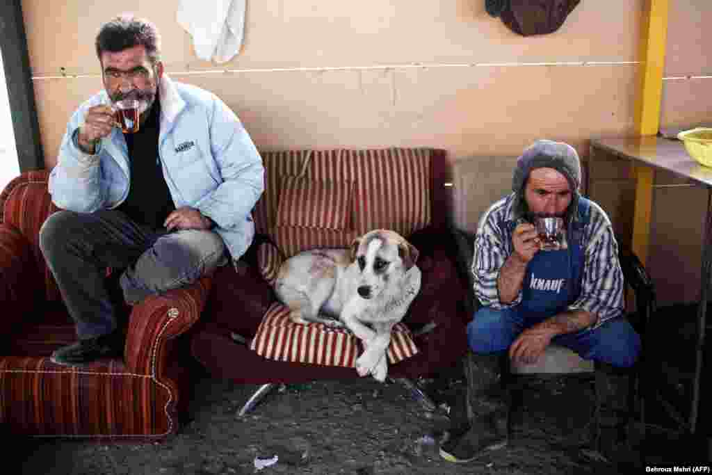 Workers of the Vafa animal shelter drink a cup of tea during a break in the town of Hashtgerd, Iran. (AFP/Behrouz Mehri)