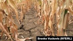 Visoke temperature prouzrokovale sušu