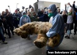 Član ruskog geografskog društva nosi tijelo Juke, bebe mamuta, kako bi ga izložili u Moskvi u oktobru 2014. godine.
