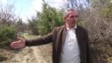 Şəkililər: 'Meşələrimizi qırıb fındıq bağı salırlar'