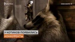 Первое енотокафе открылось в Сибири