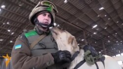 Demining Dog Helps Sappers Clear Battlefields Of Donbas