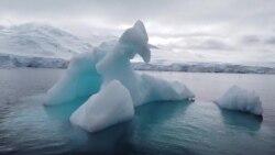 В Антарктике критично теплая зима: айсберги тают, пингвины вымирают