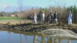 Afghanistan Fish Farming