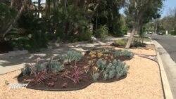 Засуха в Калифорнии заставляет садоводов сажать пустынные растения