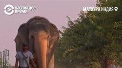 В Индии открыли клинику для слонов, пострадавших от человека
