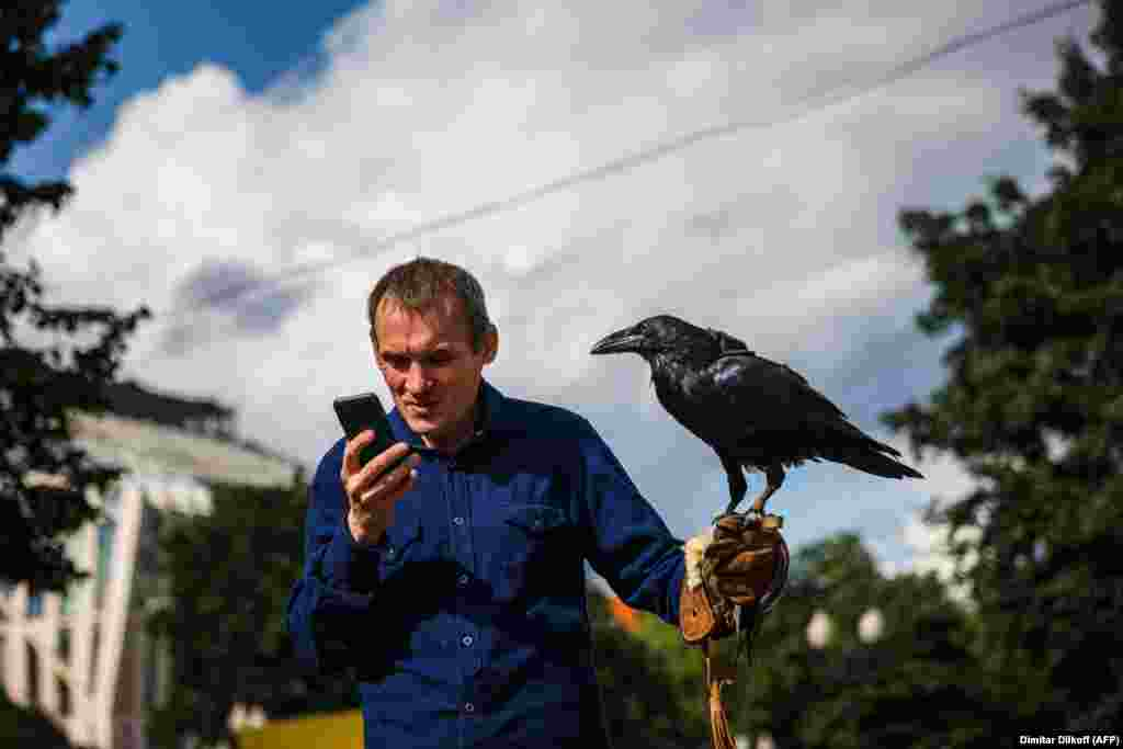 A man looks at his phone while walking with his pet raven in downtown Moscow on August 24.