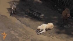 ძაღლების თავშესაფარი წყალდიდობის შემდეგ