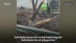 Турғун: МИБ ходимлари суд қарорида кўрсатилмаган бўлса ҳам дарахтларимизни қўпориб ташлади