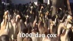 1000-dən çox iş yeri açıldı - ördəklər üçün