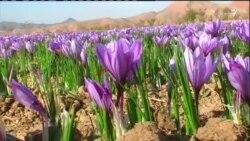 زعفران بجای خشخاش