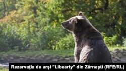 """Мечка в резервата """"Свобода"""" в Зарнещи, Румъния"""