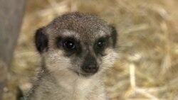 Как спасают животных в реабилитационном зоопарке в Бишкеке