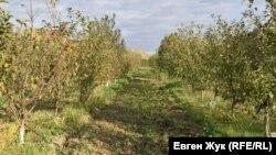 8 220 гектар ғалла майдони қисқартирилиб, боғ ва токзорлар ташкил қилинади.