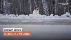Сибирский Хатико