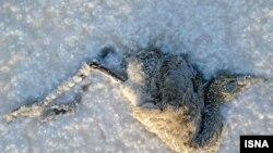 در سالهای گذشته هزاران جوجه فلامینگو در پارک ملی بختگان جان باختهاند.