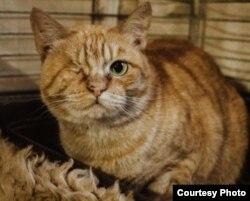 У Ніны Восіпавай жыве котка бяз лапы і вока.