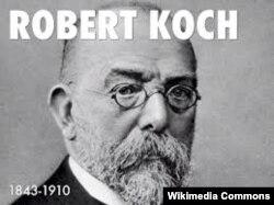 Роберт Кох, немецкий ученый, открывший бактерию, вызывающую туберкулез