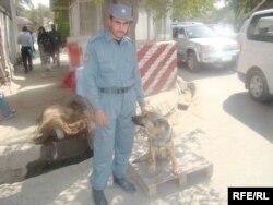 Сотрудник службы безопасности с дрессированными собаками. Иллюстративное фото.