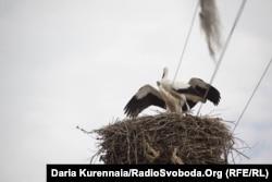 Аисты в селе Спасовка