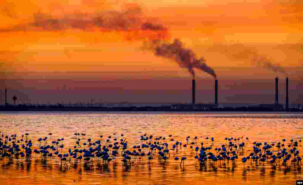 A flock of flamingos and other birds gather at the seaside with the silhouette of an industrial site of the nearby city in the background during a colorful sunset in Kuwait City. (epa/Raed Qutena)