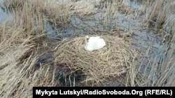 Гнездо лебедей в парке «Клебан-Бык»