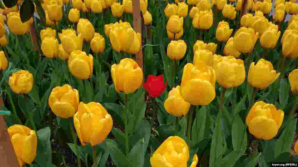 Среди желтых затесался один красный