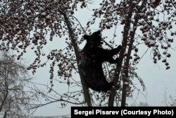 Medvjed Žora, koju se rano probudio u zoološkom vrtu u Barnaulu, spreman je za proljeće.