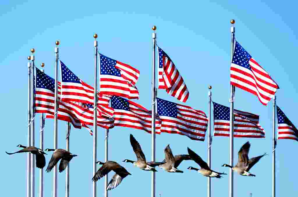 A flock of geese flies by flags near the Washington Monument in the U.S. capital. (AFP/Joe Klamar)