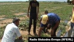 Земјоделци од прилепското село Канатларци