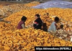 Deca među kukuruzima