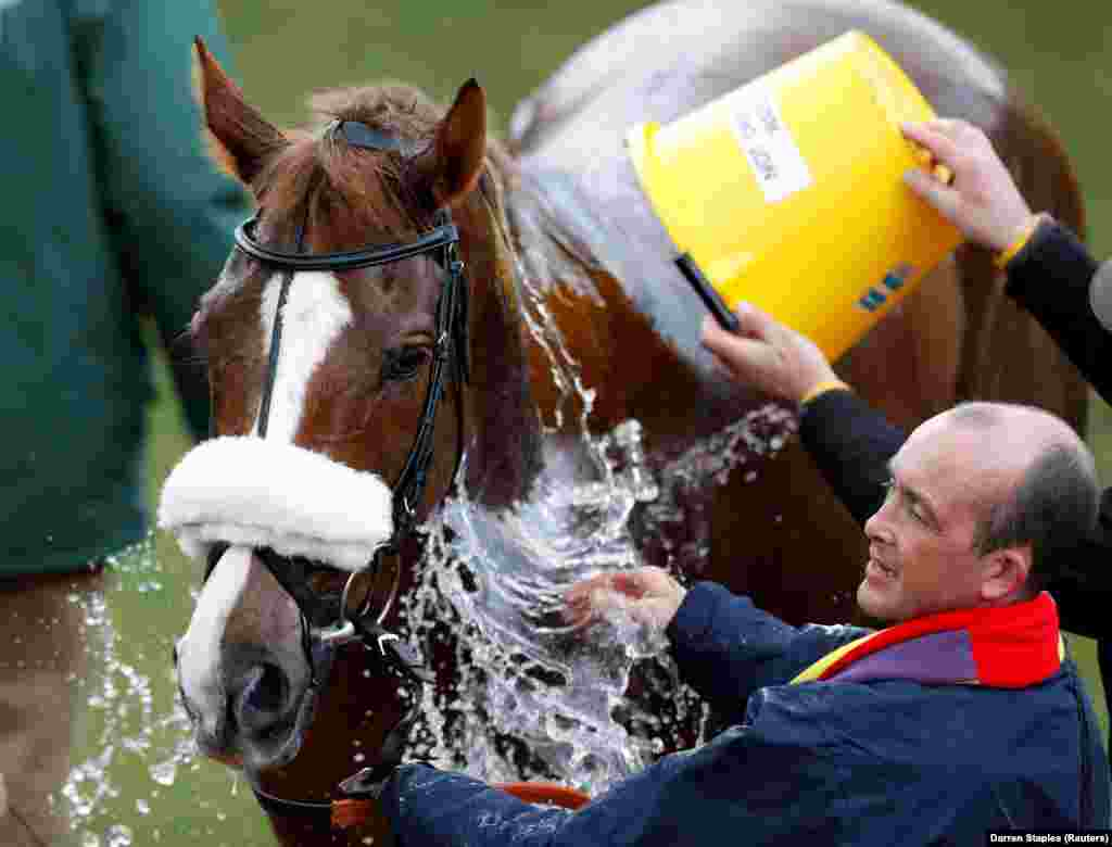 Native River is cooled off after winning the Cheltenham Gold Cup on March 16 in England. (Reuters/Darren Staples)
