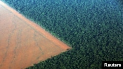 Поле на краю тропического дождевого леса в Бразилии, подготовленное для засева генно-модифицированными семенами сои