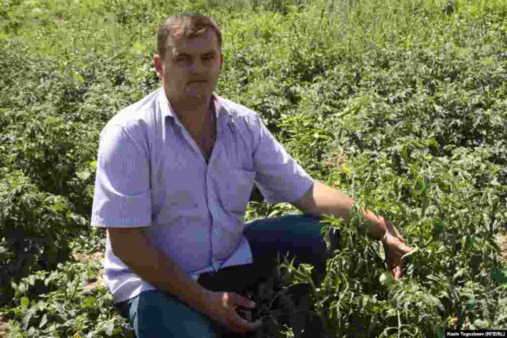 Вячеслав Баранов, управляющий подсобным хозяйством приюта отца Софрония, на помидорном поле.