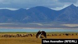 Сон-Куль – второе по величине озеро в Кыргызстане.