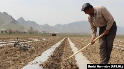 сколько занято в сельском хозяйстве