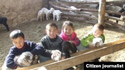 Сельская детвора играет с ягнятами.