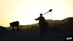 آرشیف: یک مرد کشاورز در بامیان