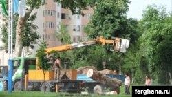 Вырубка чинар на улице Бобура в Ташкенте. Фото информационного агентства «Фергана».