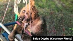 Медвежонок Балу
