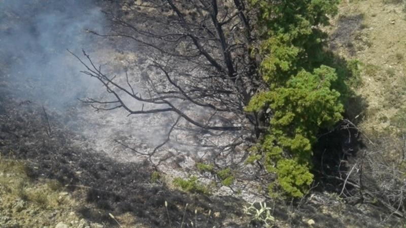Лесной пожар под Феодосией: понадобятся десятилетия на восстановление – эколог