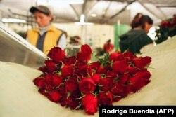 Нарыхтоўка ружаў у Эквадоры