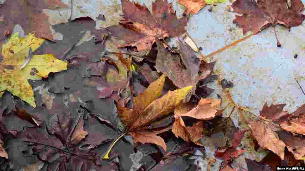 В Севастополе резко похолодало и в город наконец пришла осенняя погода. Листья на деревьях начали стремительно желтеть и опадать, а севастопольцы облачились в осенние одежды