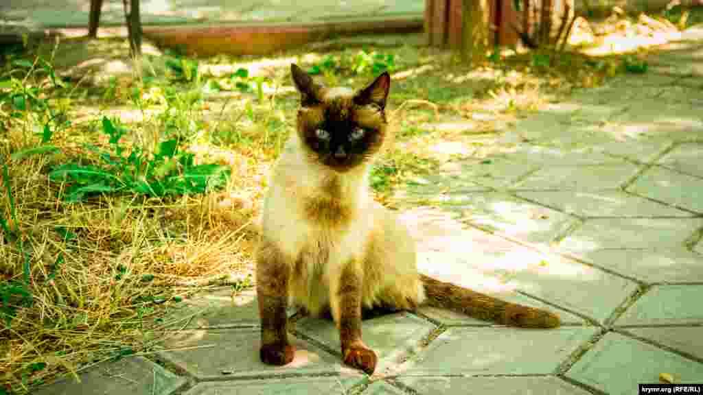 В Орджоникидзе коты камеры не боятся