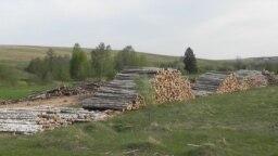 Tatarstan -- Cut trees in Rybno-Slobodsk